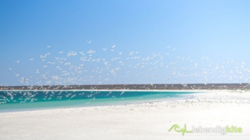 many birds flying away on the white sand beach in Gnaraloo Bay