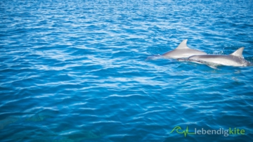 see Dolphins in Australia
