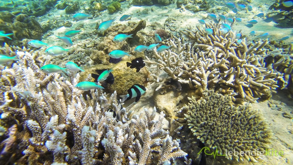 snorkeling corals Ningaloo Reef Cape Range Oyster Stacks Turquoise Bay