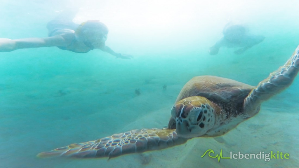 snorkeling diving Exmouth Australia Cape Range turtles