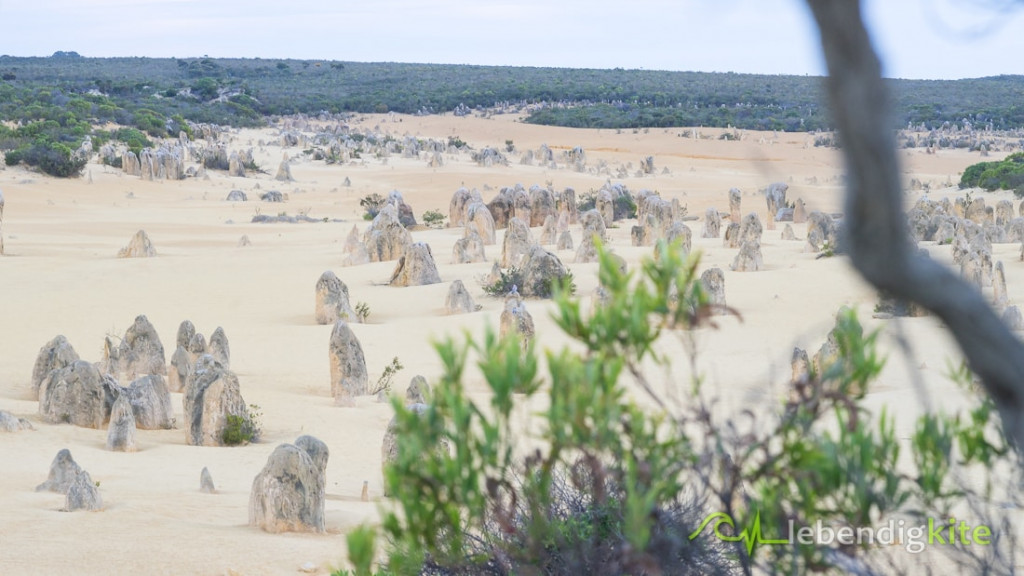 Pinnacle Dessert tour sight seeing Jurien Bay Western Australia
