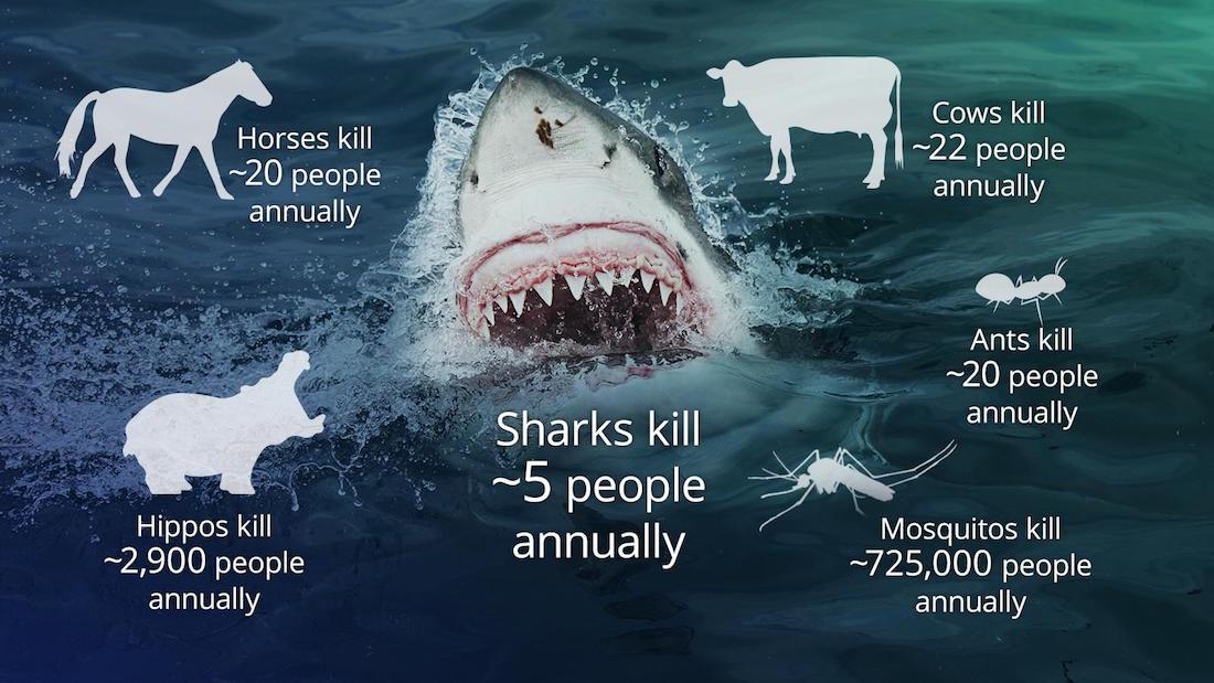 Haie Australien Haiangriffe