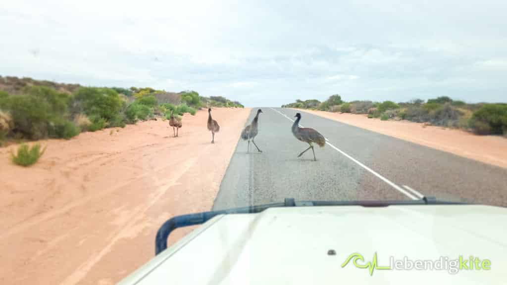 Emu Australien Exmouth