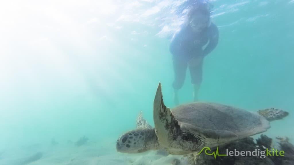 Schnorcheln mit Schildkröte Exmouth Ningaloo